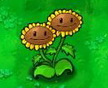 �\生向日葵