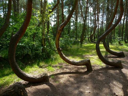 夜晚森林蛇图片