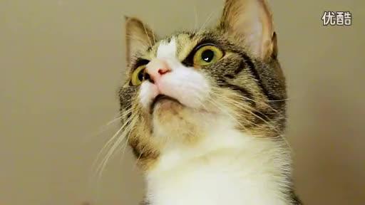 会说话的可爱小猫 高清-游戏视频
