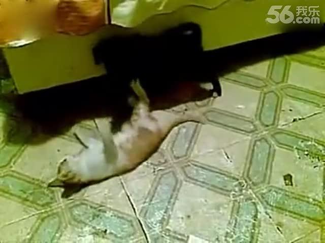 动物打架的描写