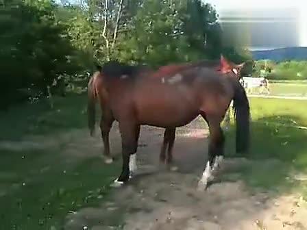 动物世界搞笑吐槽性行为之马繁殖交配实录t