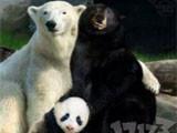 魔兽一周囧闻:熊猫人的来历 1级拿首杀?