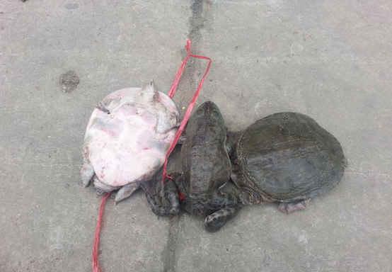 幻西游巨蛙VS大海龟 东海霸主之争图片