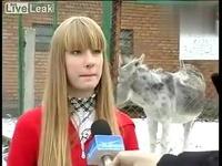 采访美女搞笑驴子大声放屁 游戏视频