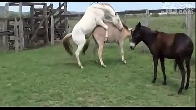 动物世界 动物性行为大全