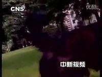 巧虎动物世界 企鹅-生活认知篇 视频特辑_171