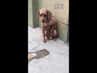 搞笑!会撸管的狗0000-视频 高清预告_17173